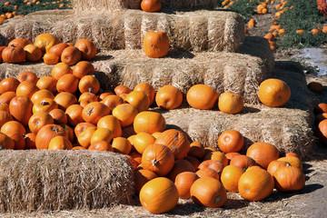 pumpkin straw bales