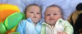 twins panorama poster