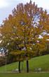 autumn park1