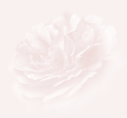 faded flower background