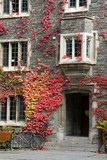 red ivy and entrance
