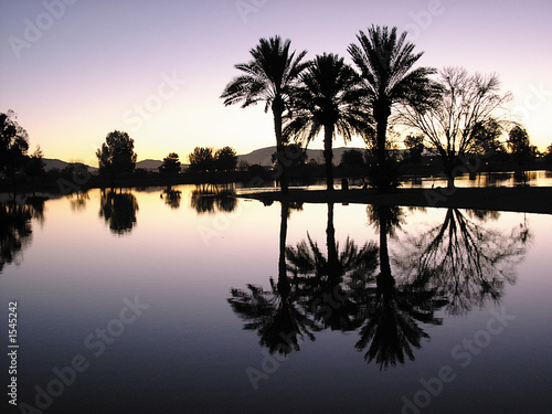 palm tree reflections