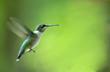 hummingbird - 1545497