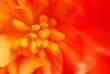 extreme macro flower