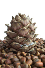siberian pine cone and nuts
