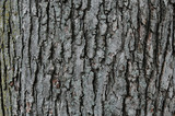 tree trunk with texture poster