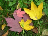 autumn multicolor leaves poster