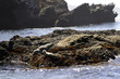 seals in big sur