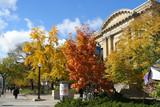 autumn street scene poster