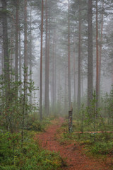 pathway in foggy wood