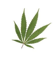 cannabis--00
