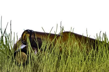 bottle in grass