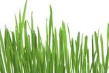 green grass, horizontal format poster