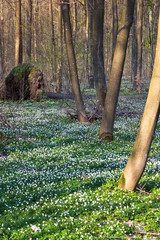 early spring in the forest