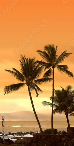 canvas print picture palm beach
