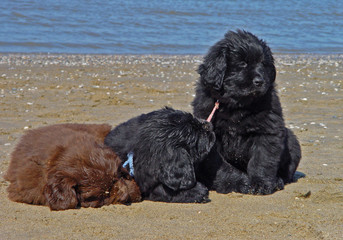 puppy dogs at the beach