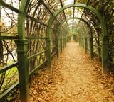 autumn vine alley - 1575634