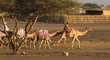 going to the camel race 2