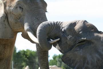 elephant embracing
