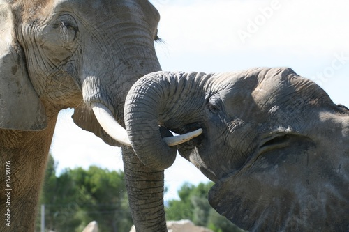elephant embracing