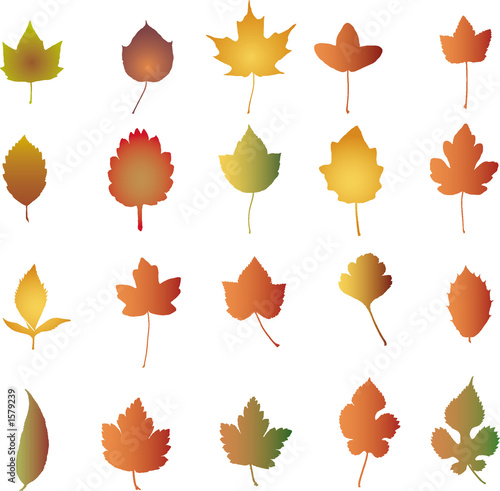 autumn leaves  -  illustration