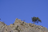 tree on rocky cliff poster