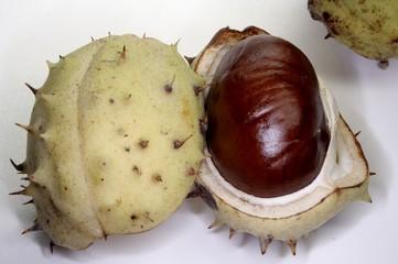 cheesnut