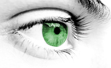 green and gray eye