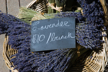 lavender for sale