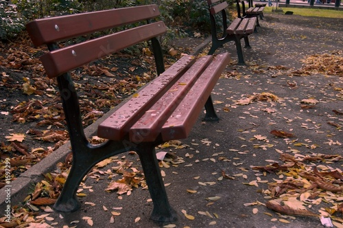 dark red bench in the park