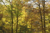 fall peak foliage season in the woods poster