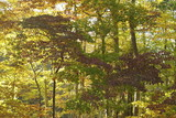 peak fall foliage in the northeast woods poster
