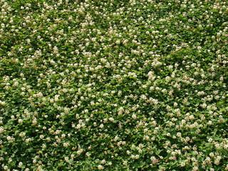 pelouse fleurie 2