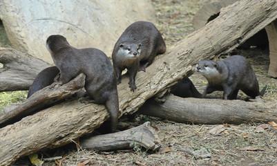 otters1