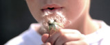 7-yr old boy blowing seeds off dandelion head. poster