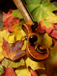 maple violin scroll and neck on autumn leaves