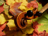 all maple !  violin scroll & neck on autumn leaves poster