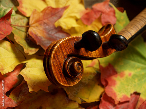 all maple !  violin scroll & neck on autumn leaves