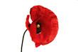 Leinwandbild Motiv poppy flower