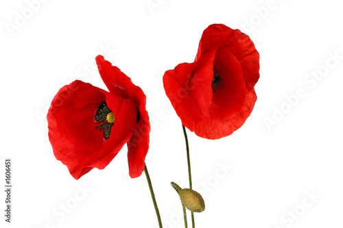 canvas print picture poppy flowers