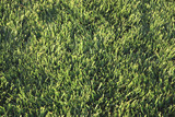 grass,lawn poster
