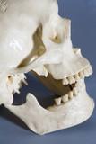 human skull head bones poster