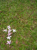 single flower cross on green grass -space for copy poster