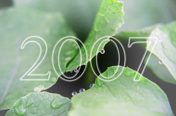fresh new year 2007