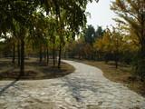 autumn scenery poster