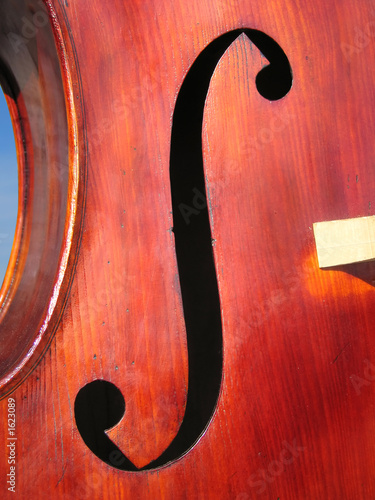 double-bass body