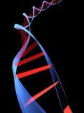 doppelhelix gene poster