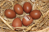 fresh brown speckled eggs poster