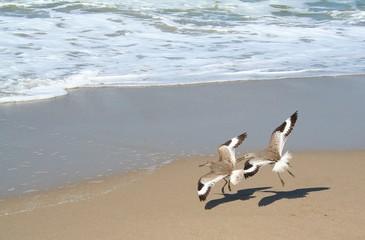 two birds flying in unison