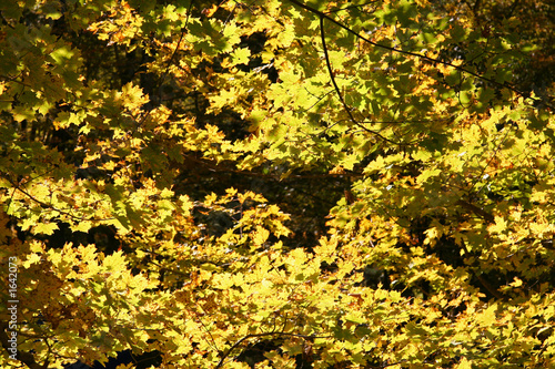 yellow forest leaves